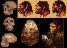 Homo Erectus, probable gene donor for adapting Nibiran genome to make smart laborers. Erectus, ancestor of modern Neanderthal (Big Foot) was extremely empathetic.