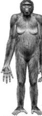 bigfoot woman right arm cut